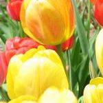Frühling in Sachsen