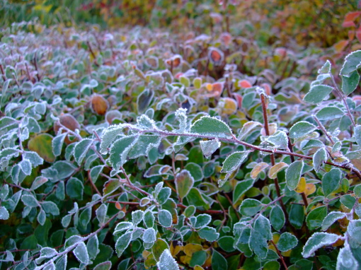 Thin crust of frost covers everything
