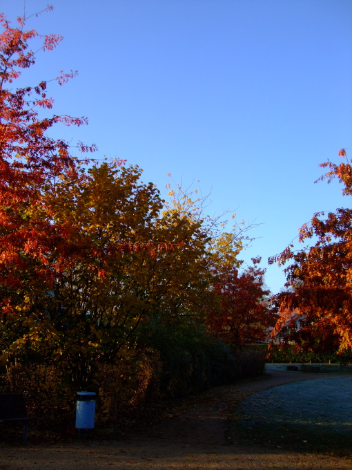 Blue sky, Indian summer colors