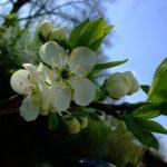 FO :: Haapsalu Lace Shawl – Hearts in Estonia ::