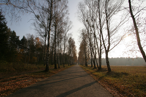 Birkenallee in Groß Dölln - birch lined country road
