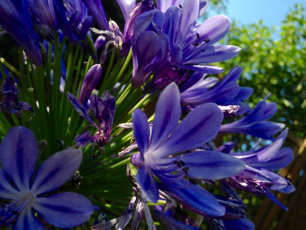 Pretty purple flowers.