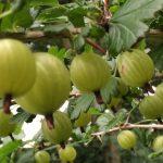 Strickgeflüster KW 24 :: Gartenfreuden und häkeln für die Umwelt ::