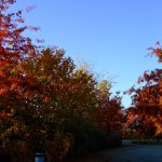 Eye Candy Friday :: Beautiful Autumn ::