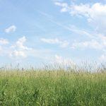 Strickgeflüster KW 23 :: Sommer, Sonne, Sonnenschein ::
